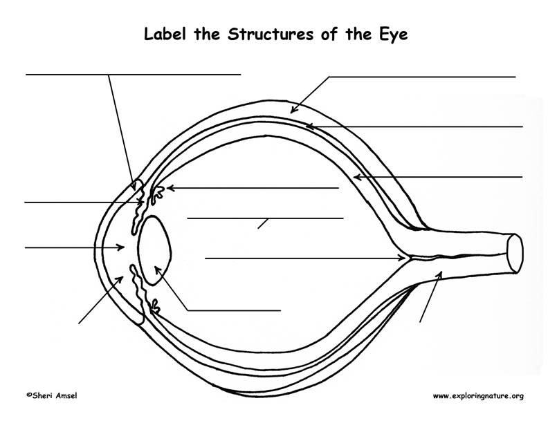 Atemberaubend human eye anatomy pdf bilder menschliche anatomie vision and the structure of the eye ccuart