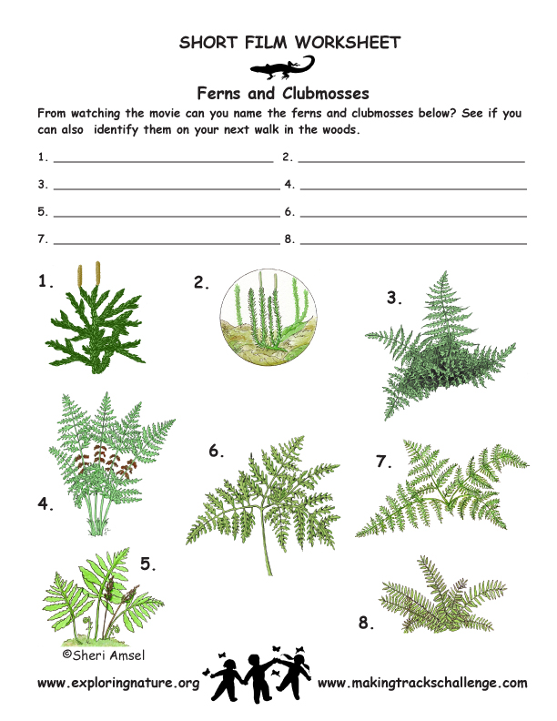 Vascular Plants Trees Grass Ferns Flowering Plants – Vascular and Nonvascular Plants Worksheet