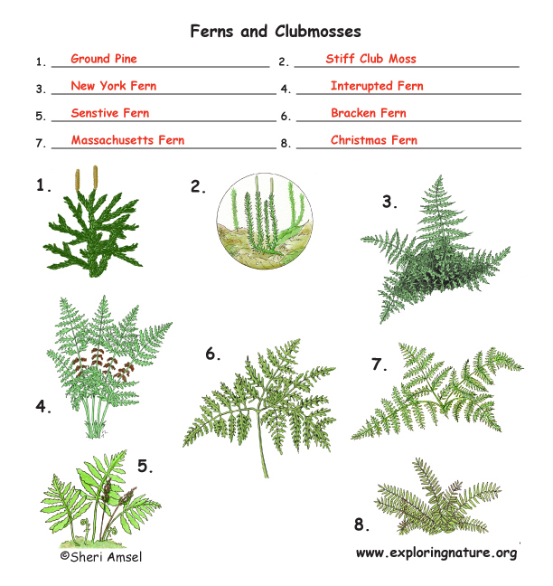Vascular Plants (Trees, Grass, Ferns, Flowering Plants)