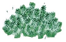 Mosses (Bryophytes)