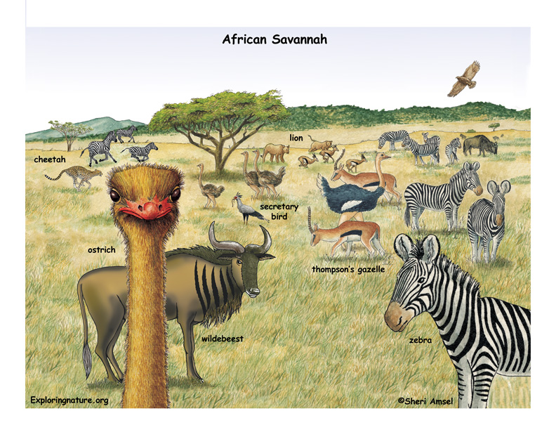 The African Veldt and Savannah