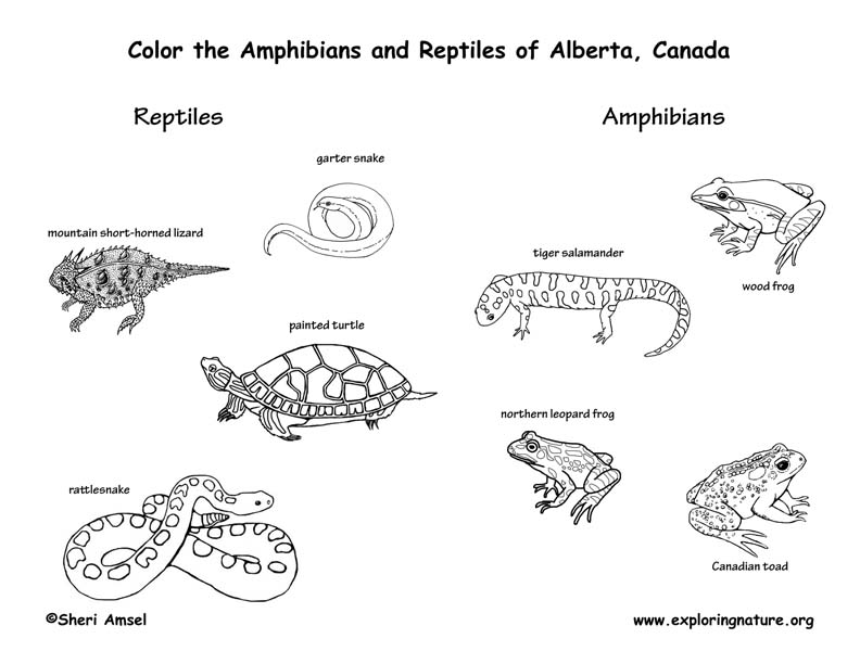 alberta coloring pages - photo#20