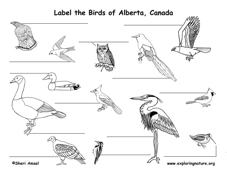 Canadian Province - Alberta