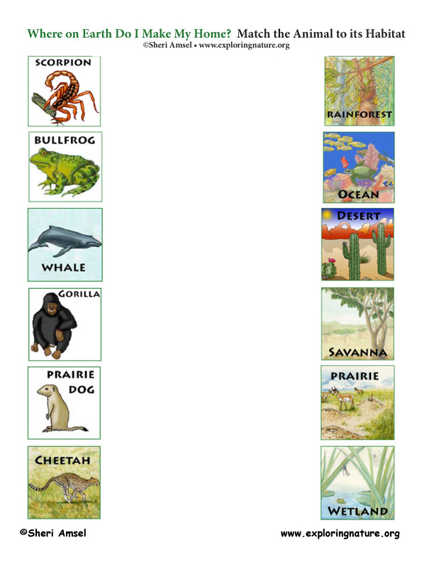 Match the Animals to Their Habitats Game – Habitat Worksheets