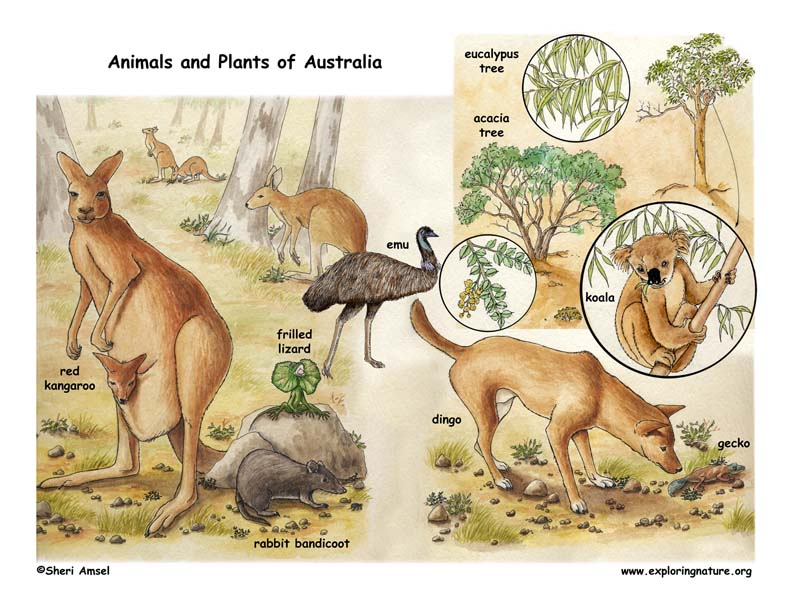 Color Poster of Australia