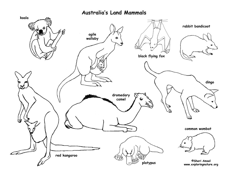 mammals coloring pages - photo#12