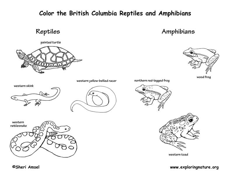 Canadian Province - British Columbia amphibians and reptiles coloring page