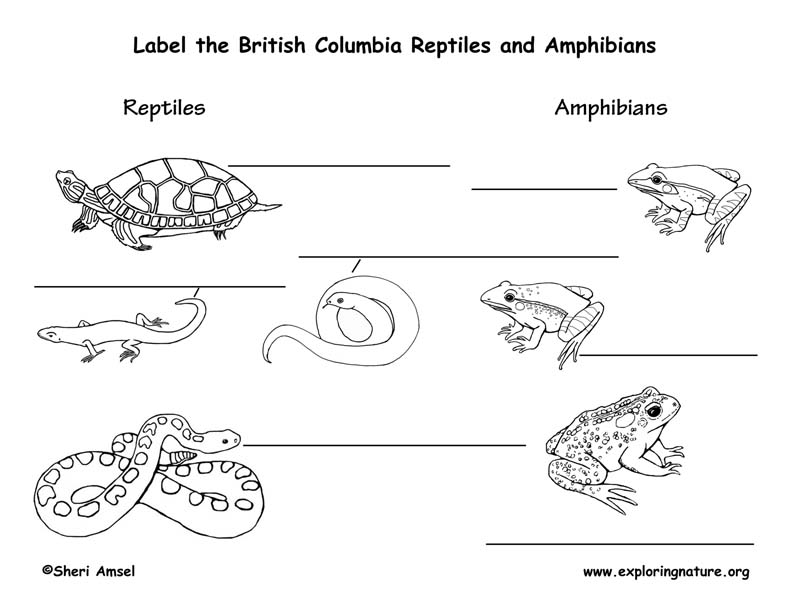 Canadian Province - British Columbia amphibians and reptiles labeling page