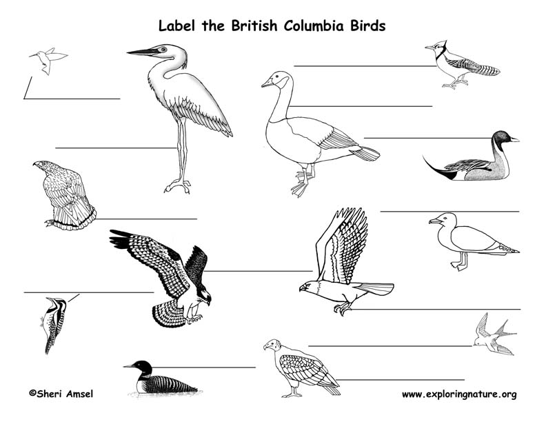 Canadian Province - British Columbia birds labeling page