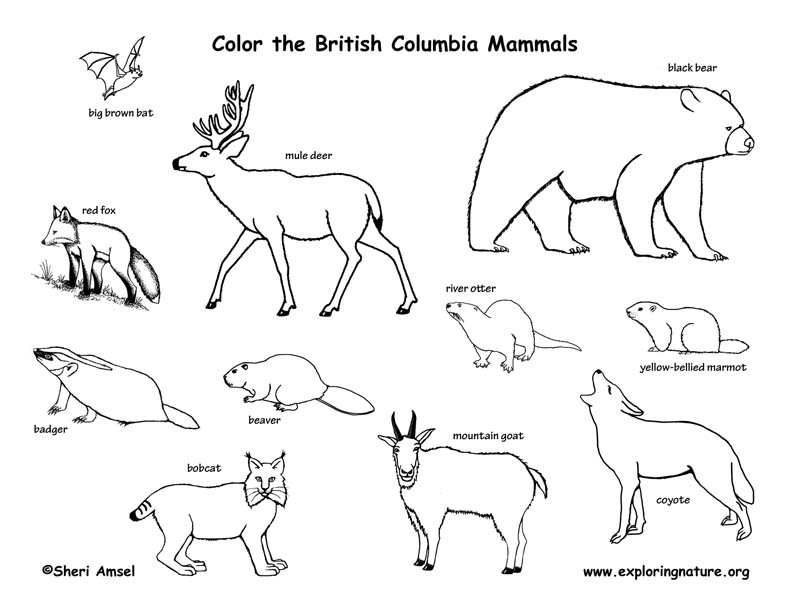Canadian Province, British Columbia mammals coloring page