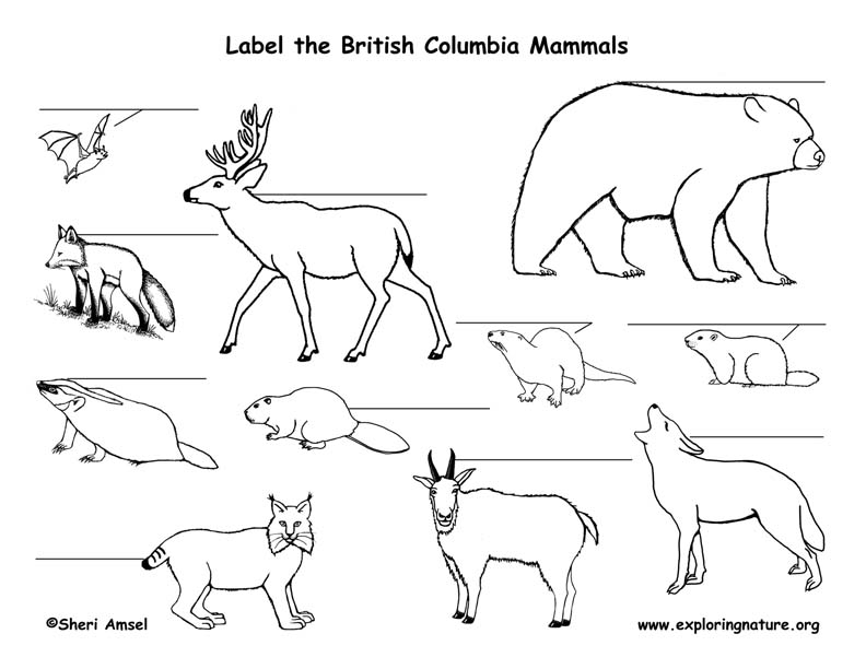 Canadian Province - British Columbia mammals labeling page