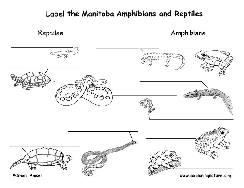 Canadian Province - Manitoba  amphibians and reptiles labeling page