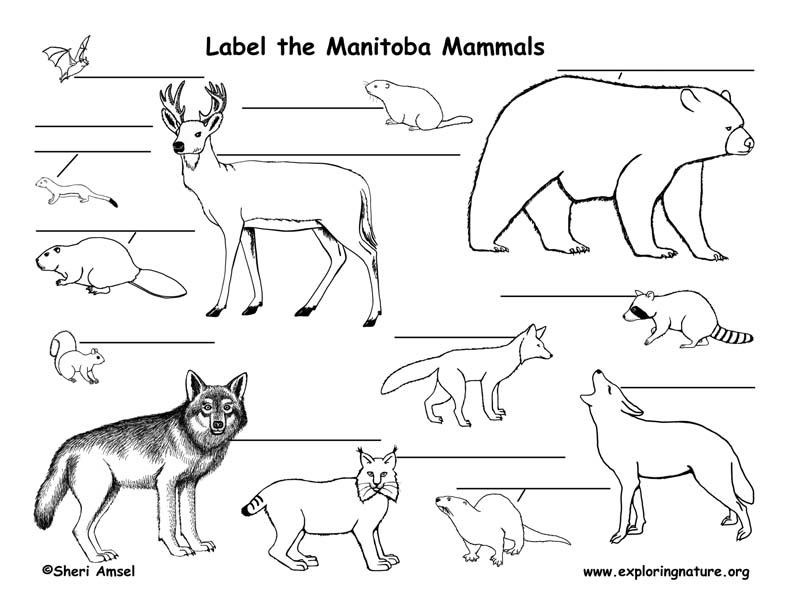 Canadian Province - Manitoba mammals labeling page