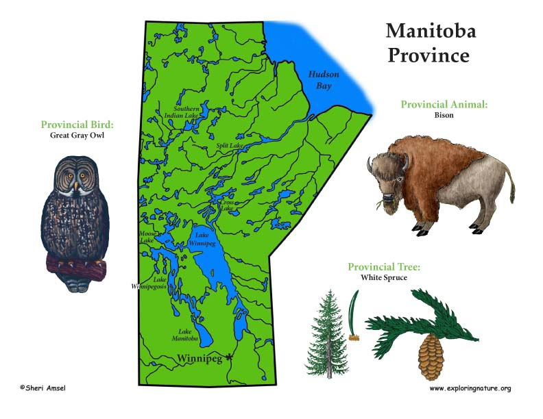 Canadian Province - Manitoba color map