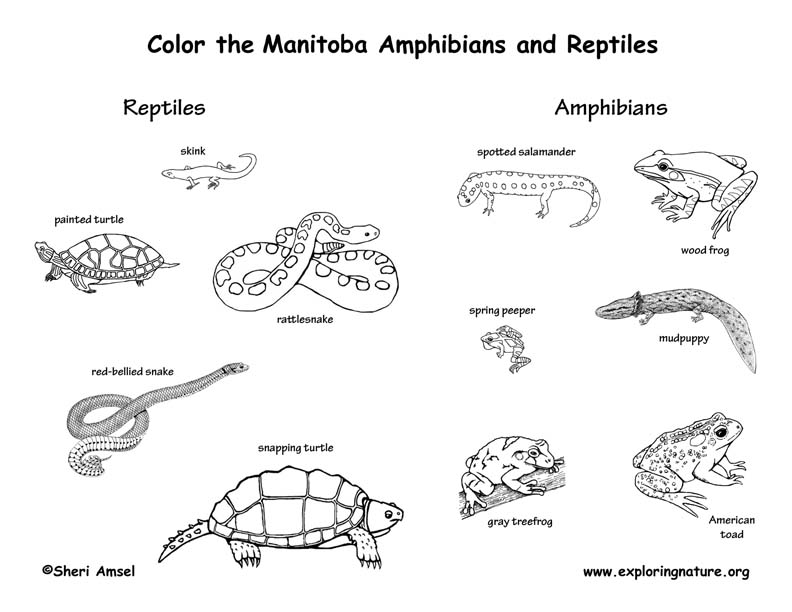 Canadian Province - Manitoba amphibians and reptiles coloring page