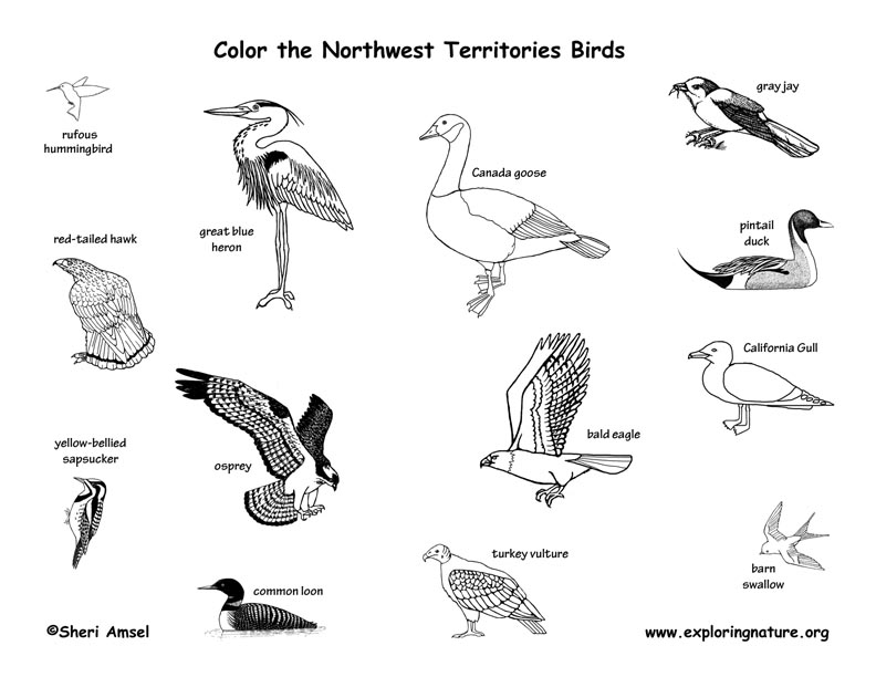 Canadian Territory - Northwest Territories birds coloring page