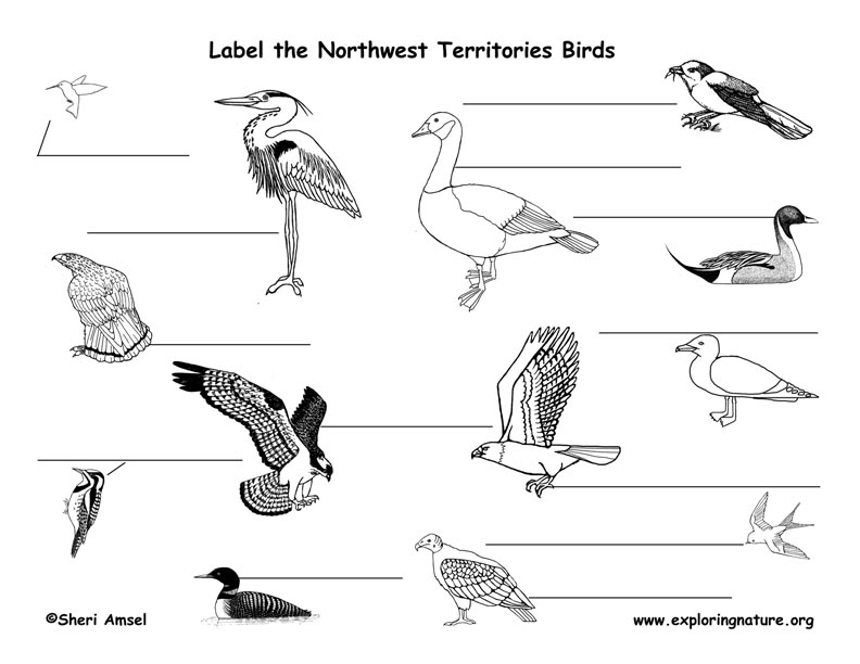 Canadian Territory - Northwest Territories birds labeling page