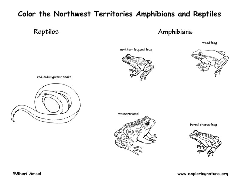 Canadian Territory - Northwest Territories amphibians and reptiles coloring page