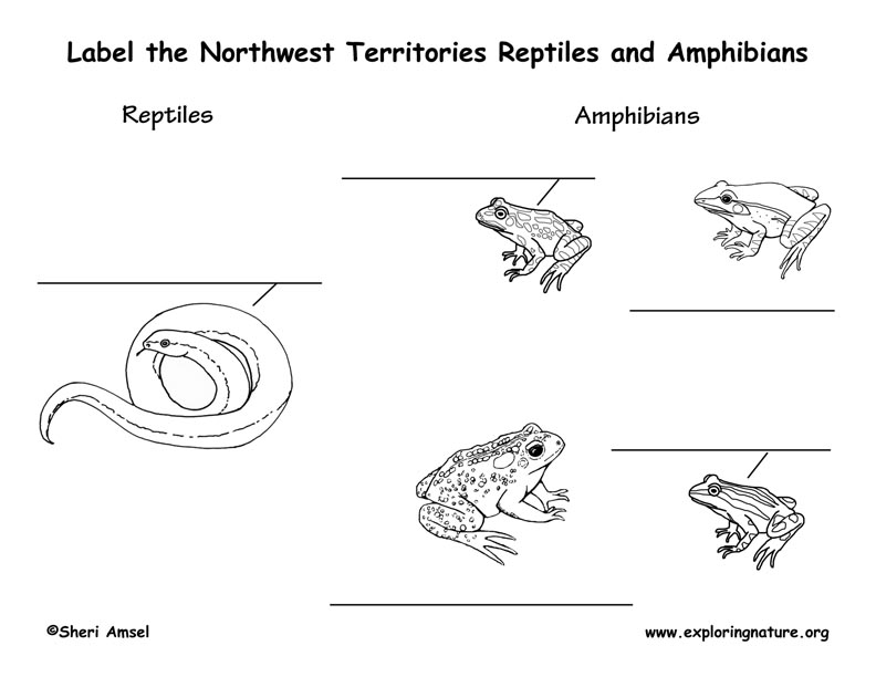 Canadian Territory - Northwest Territories amphibians and reptiles labeling page