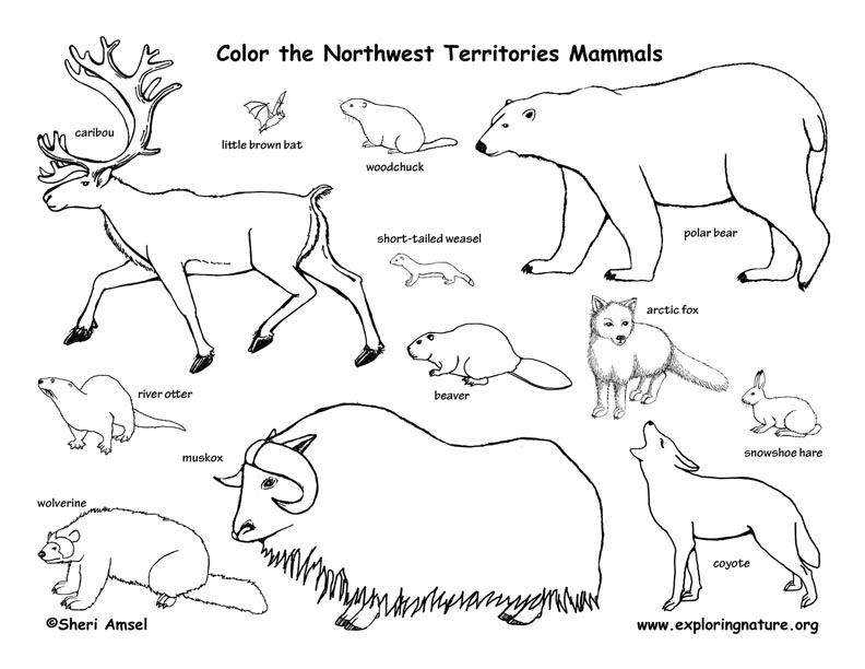 Canadian Territory - Northwest Territories mammals coloring page