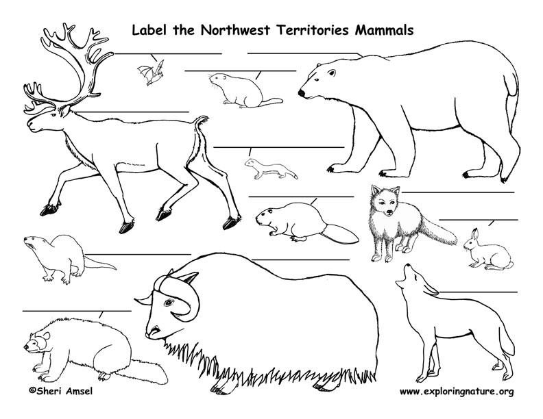 Canadian Territory - Northwest Territories mammals labeling page