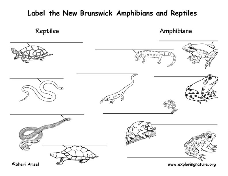 Canadian Province - New Brunswick amphibians and reptiles labeling page