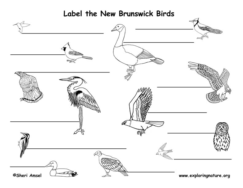 Canadian Province - New Brunswick birds labeling page