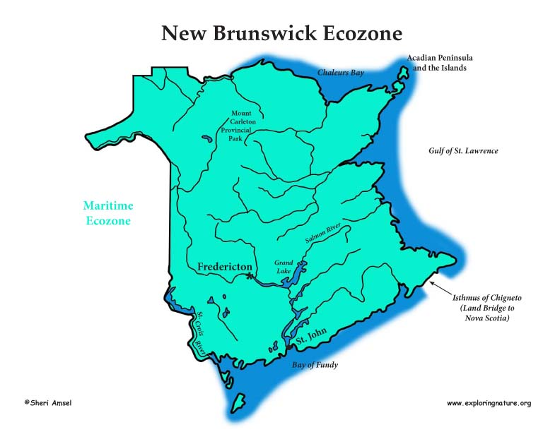 Canadian Province - New Brunswick ecozones