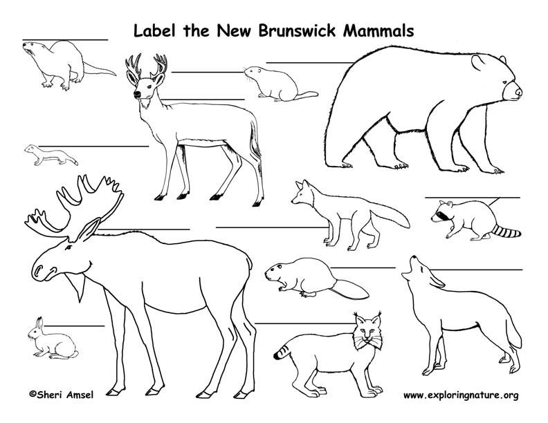 Canadian Province - New Brunswick mammals labeling page