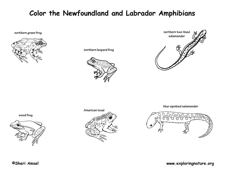 Canadian Province - Newfoundland and Labrador amphibians and reptiles coloring page