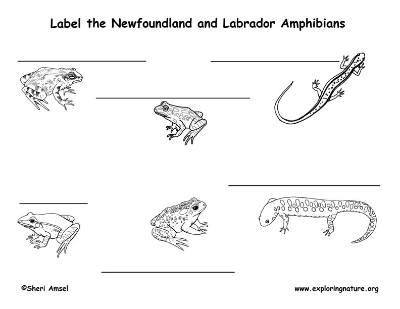 Canadian Province - Newfoundland and Labrador amphibians and reptiles labeling page