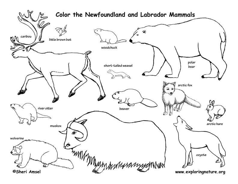 canadian province newfoundland and labrador. Black Bedroom Furniture Sets. Home Design Ideas