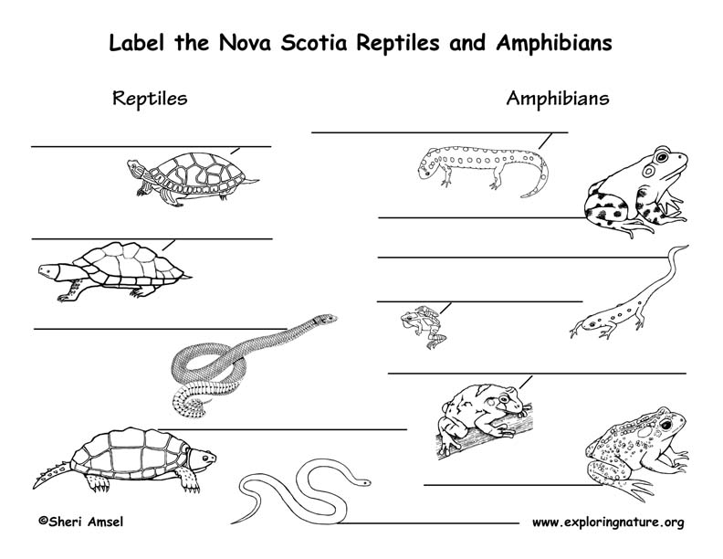 Canadian Province - Nova Scotia amphibians and reptiles labeling page