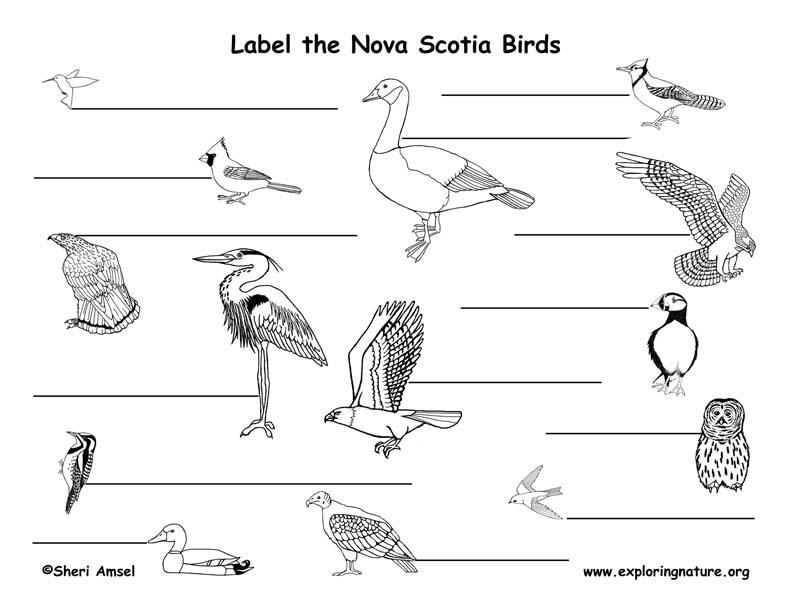 Canadian Province - Nova Scotia birds labeling page