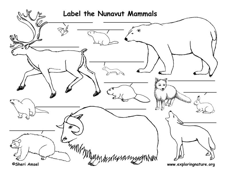 Canadian Territory - Nunavut mammals labeling page
