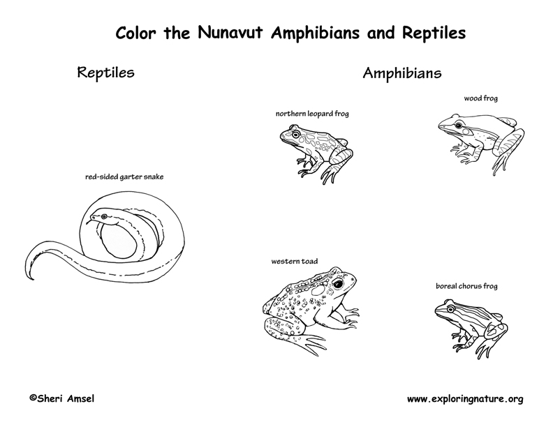 Canadian Territory - Nunavut amphibians and reptiles coloring page