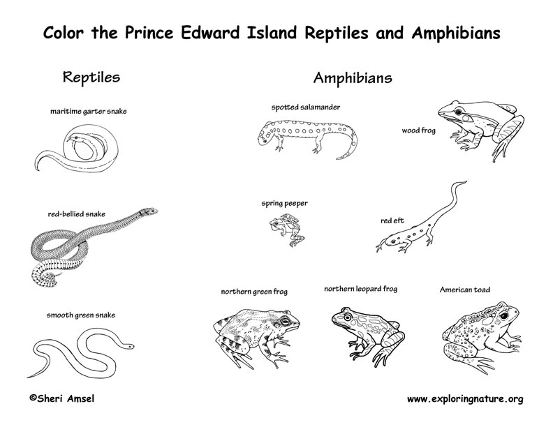 Canadian Province - Prince Edward Island amphibians and reptiles coloring page