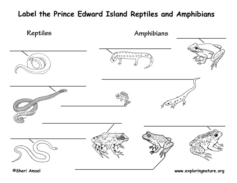 Canadian Province - Prince Edward Island amphibians and reptiles labeling page