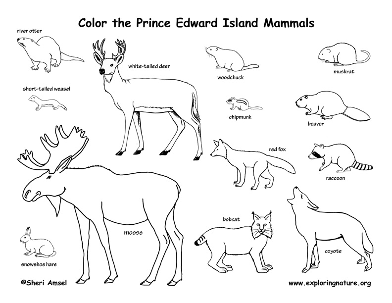 Canadian Province - Prince Edward Island mammals coloring page