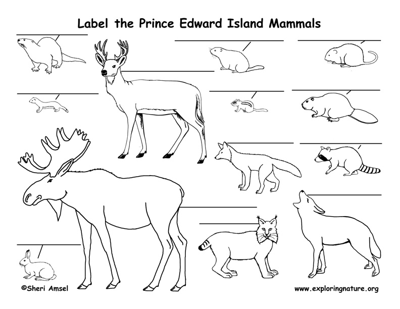 Canadian Province - Prince Edward Island mammals labeling page
