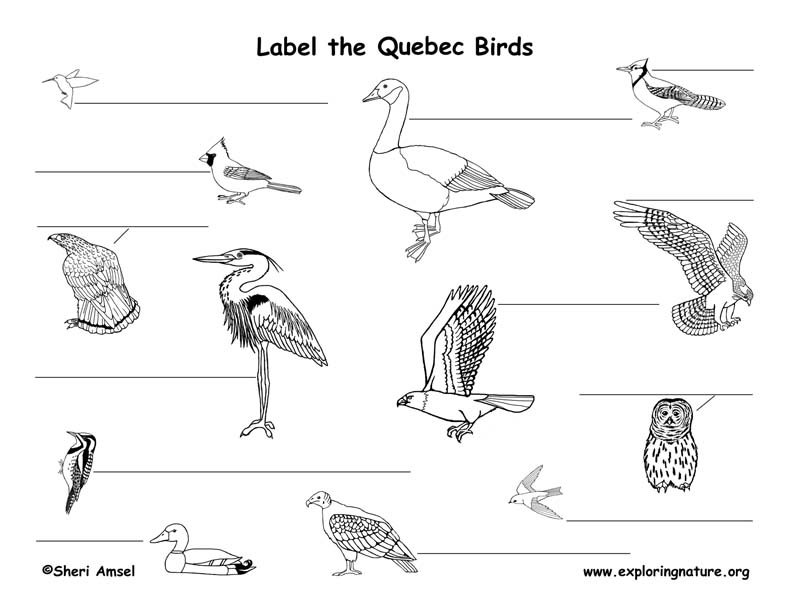 Canadian Province - Quebec birds labeling page