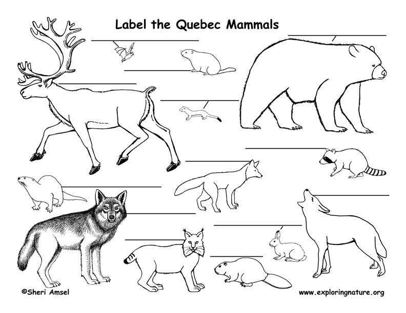 Canadian Province - Quebec mammals labeling page