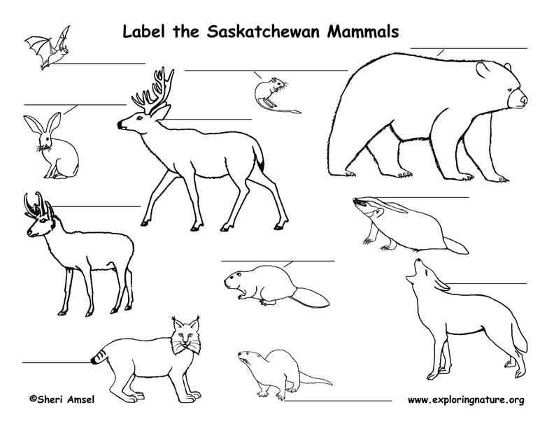 Canadian Province - Saskatchewan mammals labeling page