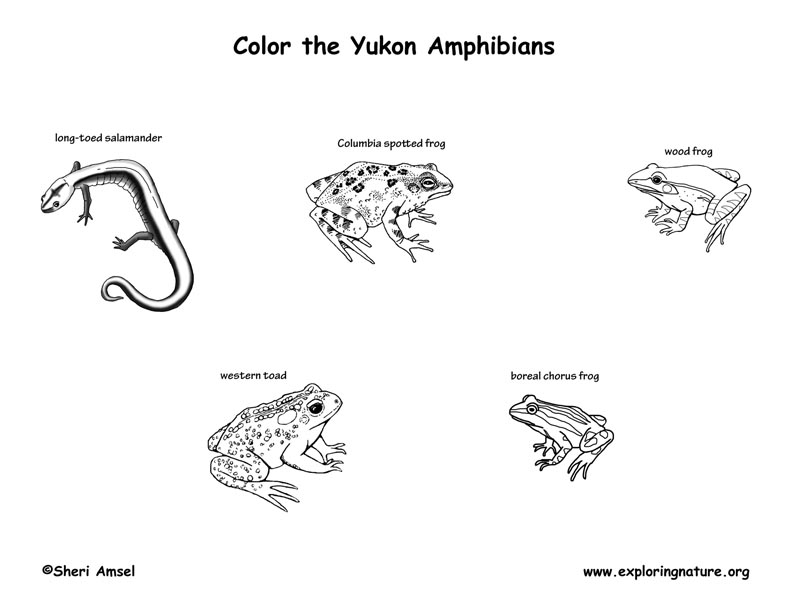 Canadian Territory - Yukon amphibians and reptiles coloring page