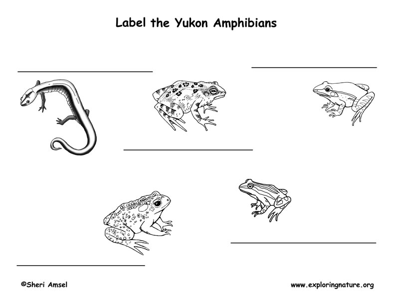 Canadian Territory - Yukon amphibians and reptiles labeling page