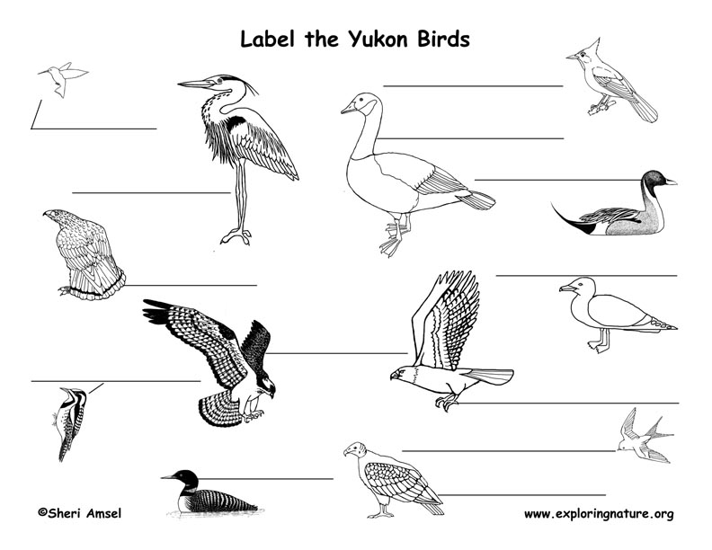 Canadian Territory - Yukon birds labeling page