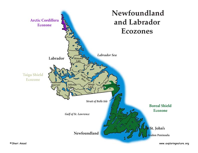 Canadian Province - Newfoundland and Labrador ecozones