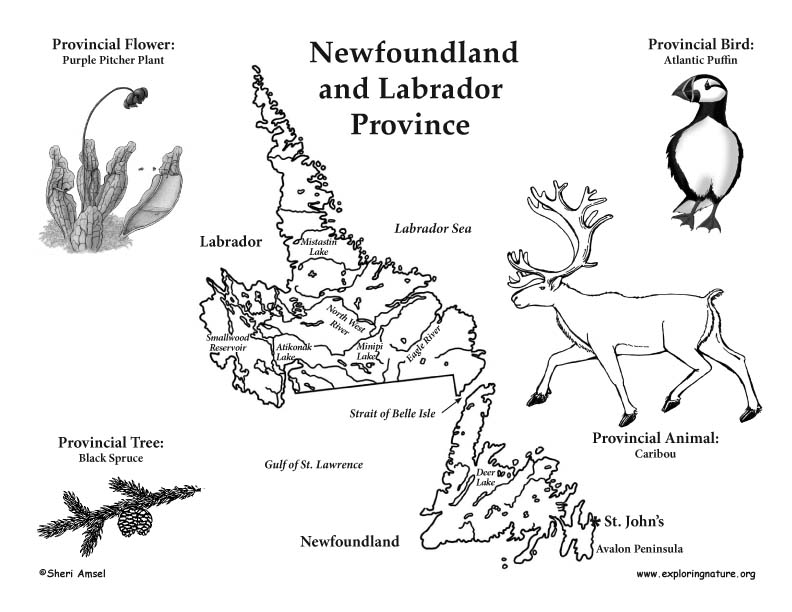 newfoundland coloring pages - photo#20