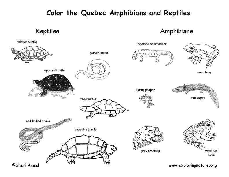 Canadian Province - Quebec amphibians and reptiles coloring page