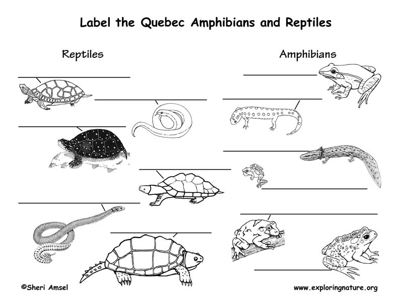 Canadian Province - Quebec amphibians and reptiles labeling page